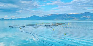 Salmon farm in a fjord between   mountains in Western Norway Hardanger fjord area at summer.